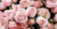 flower%203_edited.jpg