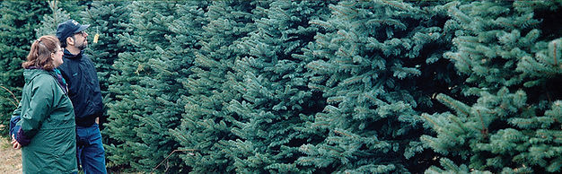 Tree Selection 1336x414.jpg