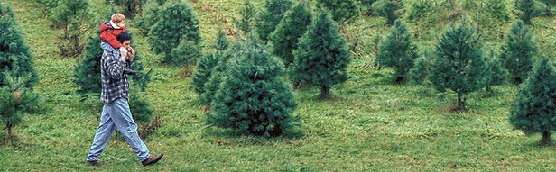 Tree Types 1336x414.jpg