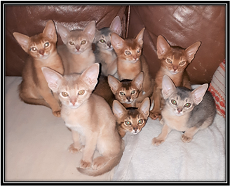 chatons.png