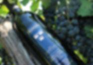 Bottle-Grapes.JPG