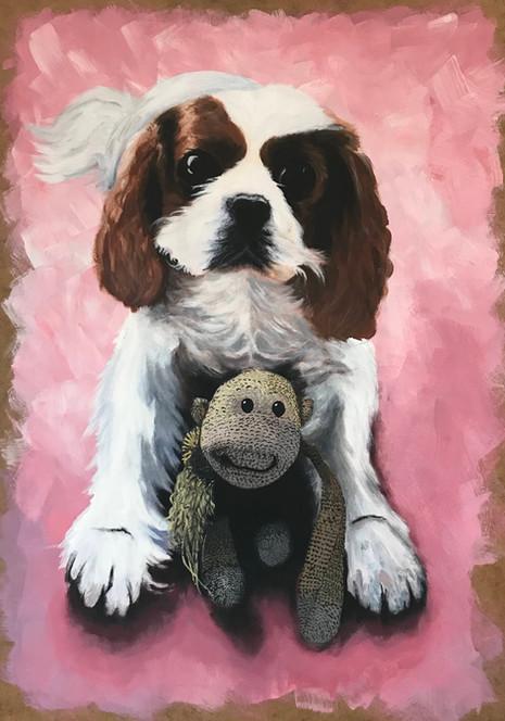 Nooki & Monkey | Cavalier King Charles | 2019