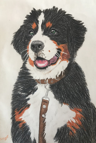 Pupper | Reference | 2020