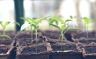 seedling-5009286_1920_edited.jpg
