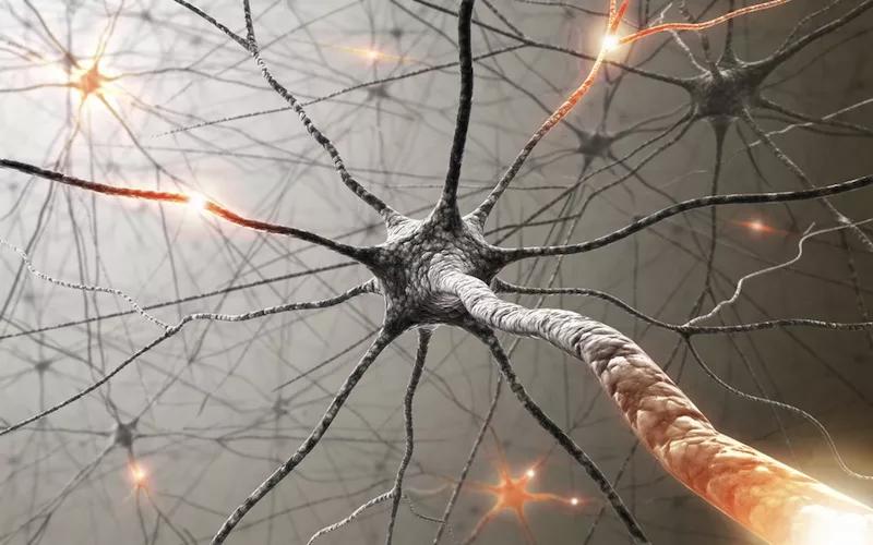 brain-cell.jpg.webp
