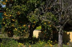 Citrus fruit!