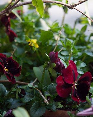 Multipliez les plantes vivaces, elles sont faciles d'entretien, colorées, résistantes : gratifiantes en somme !