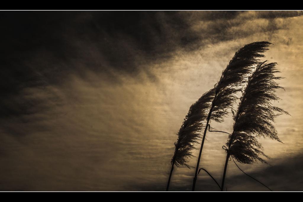 """""""Al viento"""""""