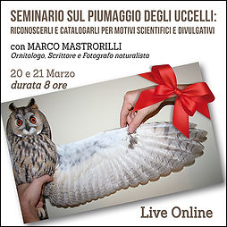 Seminario sul piumaggio degli uccelli; riconoscerli e catalogarli