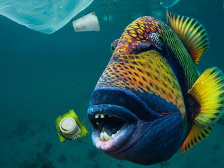Avanotti che divorano la plastica. Le catene alimentari dei mari minate alla base. Ora basta!