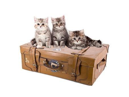 E' tempo di vacanza anche per il gatto.