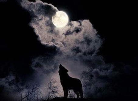 Lupi e luna piena