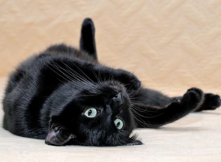 Volevo un gatto nero: leggende e superstizioni!
