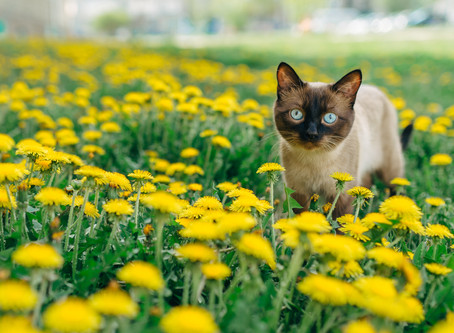 Ci vuole un fiore.. per ogni emozione di micio