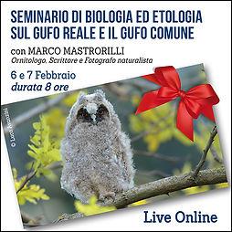 Seminario di biologia ed etologia  su gufo reale e gufo comune