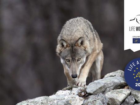 E sulle Alpi? Il lupo in Italia: situazione attuale e prospettive future 2p