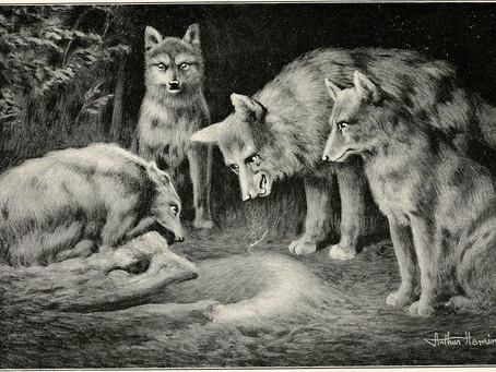 Lupi, licantropi e cristianità 3p