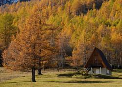 casetta bosco larici