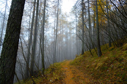 lariceto  sentiero 1