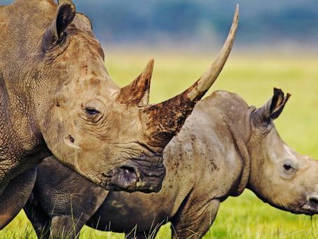 La natura è una sola e non ricaricabile!  Oggi 3 marzo è il  WORLD WILDLIFE DAY