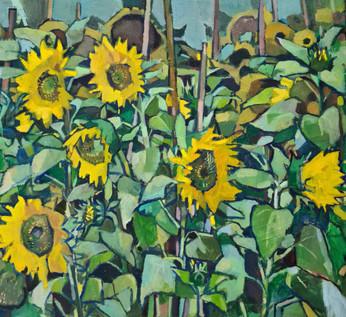 Sunflowers in blue sky