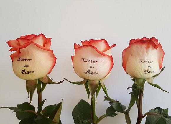 Pack TRES Rosas