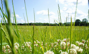 Rye Grass Meadow