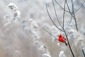 ...The birds like leaves on Winterwood, sing hopeful songs on dismal days. They've learned to live life as they should, they are at peace with natures ways...  From the song Winterwood by Don Mclean  Photo by Ray Hennesy / Unsplash