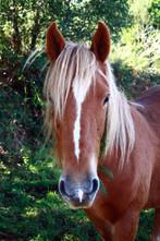 A Cute mare