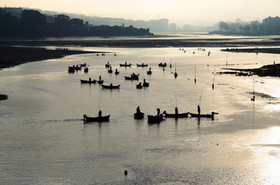 Collecting seafood in O Burgo estuary at dawn