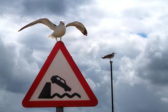 Seagull warning