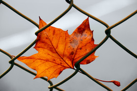 A leaf in the jailhouse