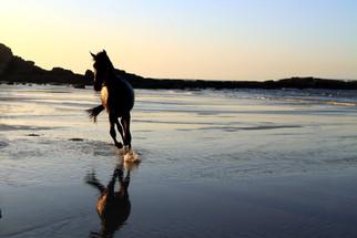 Free at the beach