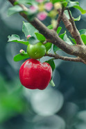 ...I wish I were an apple swingin' in an apple tree, every time my baby came by she'd take a bite of me...  From the song Get On Home by Steve Miller Band  Photo by Gabriel / Unsplash