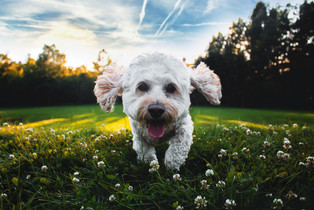 ...When you were a young boy did you have a puppy that always followed you around? Well, I'm gonna be as faithful as that puppy, no, I'll never let you down...  From the song River Deep Mountain High by Ike & Tina Turner  Photo by Joe Caione / Unsplash