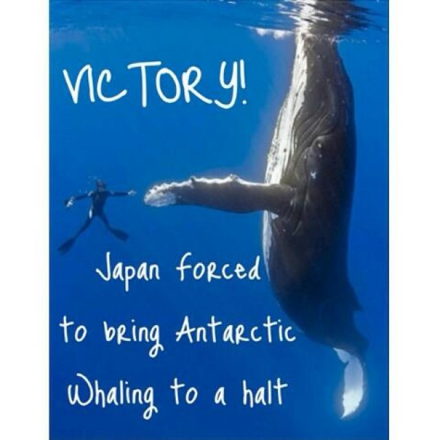 BREAKING: Japan has OFFICIALLY announced that it will STOP all whaling