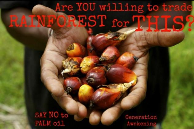 Why You Should Boycott Palm Oil