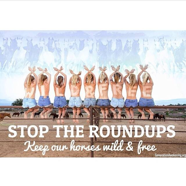 WILD & FREE Campaign for Wild Horses