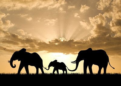 Global March For Elephants & Rhinos: Oct. 4th 2014
