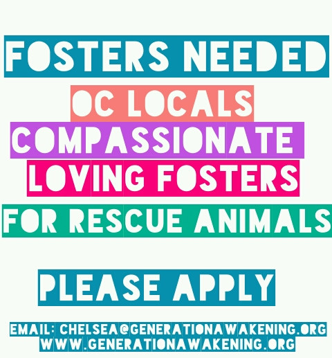 OC LOCALS: FOSTERS NEEDED!