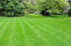 5 Reasons to keep better lawns.jpg