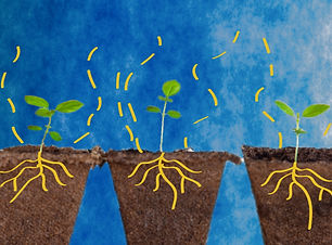 digital-start-ups-hero-plant.jpg