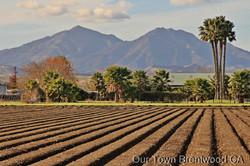 farm rows and mt diablo