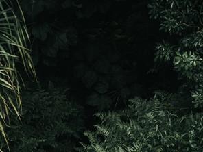 How I Met Jesus in the Jungle