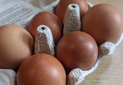 Rich Yolk Eggs