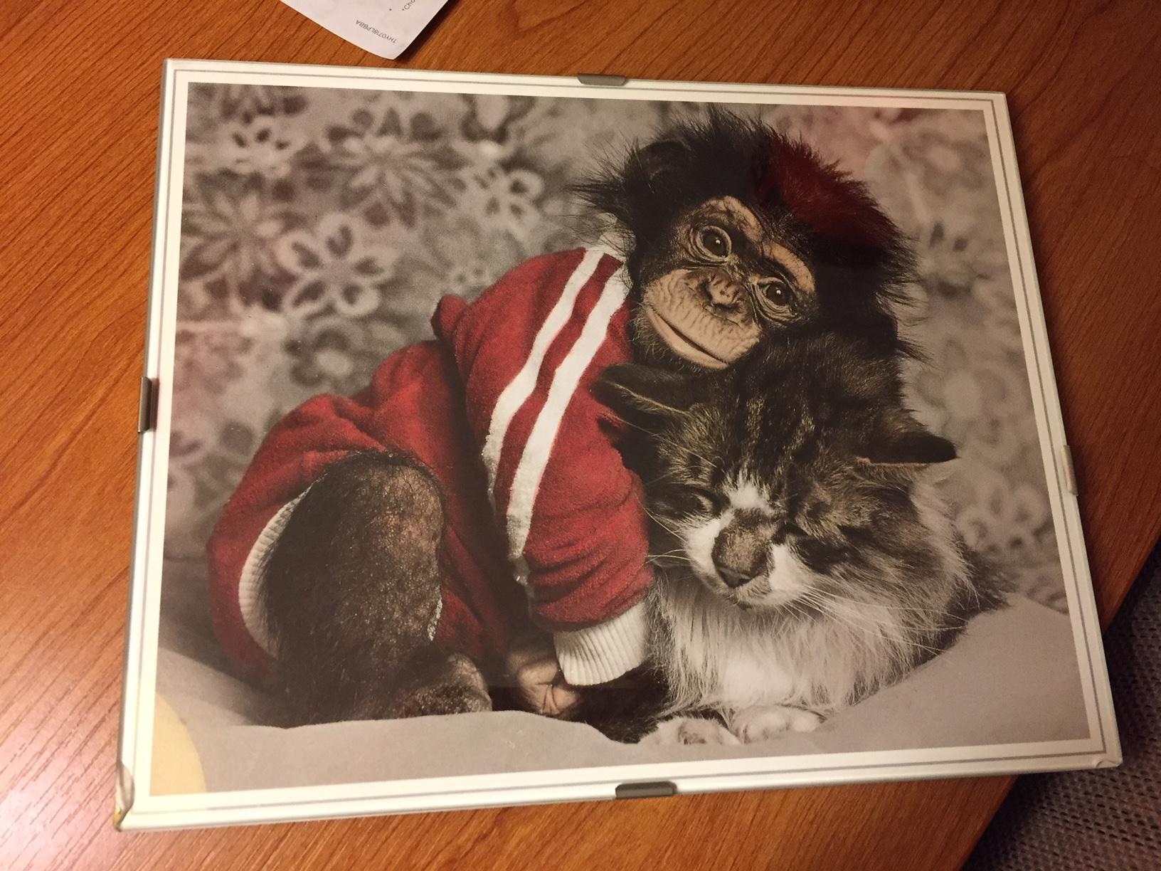 CS 100 Chimp & Cat