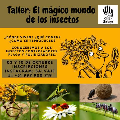 El mágico mundo de los insectos