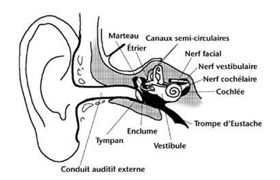 Les différents types de Vertiges et l'Ostéopathie