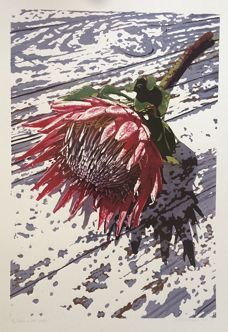 Protea-on-old-table.jpg