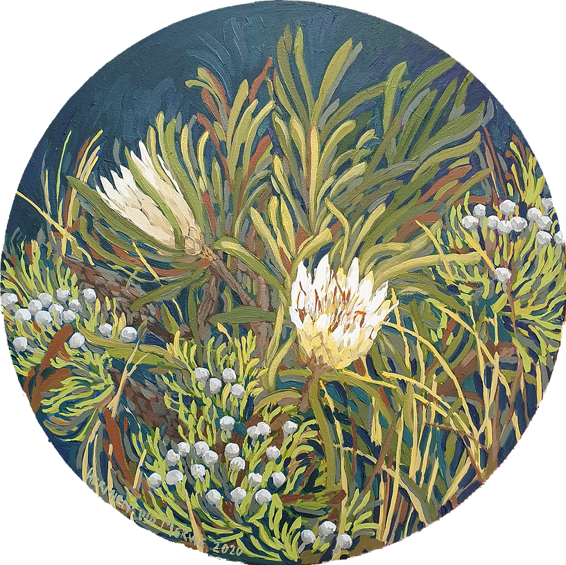 Fynbos abundance; Sugarbush Protea; 600m